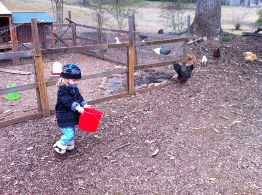 HJ feeding our neighbor's chickens.